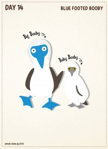 Day14-Blue Footed Booby-01